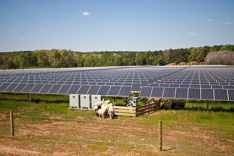 SolarFarminHorne Renewables Generation More Than Doubles its Generation in Just One Year
